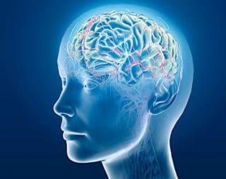 Мозг 02