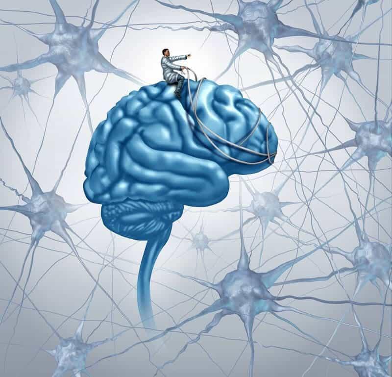www.snail.org.ua эйдетикаcontent_neuroplasty_of_the_brain