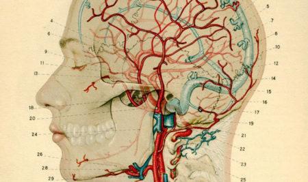 Когнитивные тренировки способны омолодить мозг пожилых