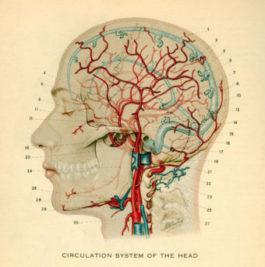 Чем кормить мозг?